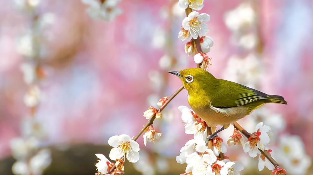 春季彼岸会法要イメージ