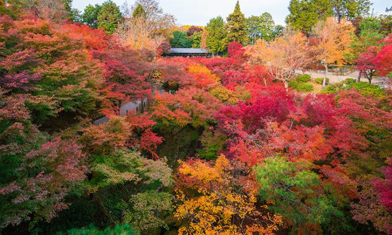 京都は東福寺の紅葉