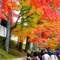 臥雲橋から願成寺への道