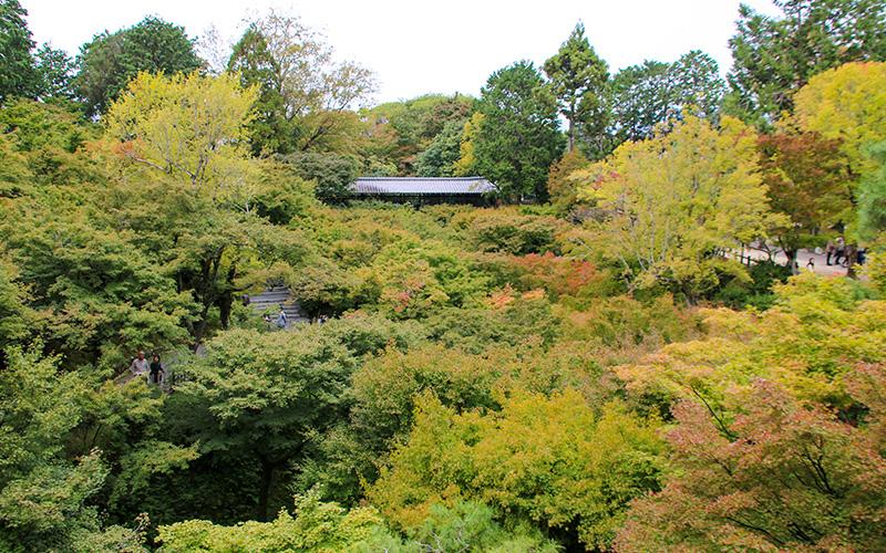 東福寺通天橋から臥雲橋を眺める