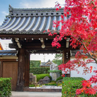 願成寺 山門の紅葉