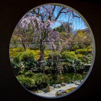 願成寺の円窓から日本庭園を眺める